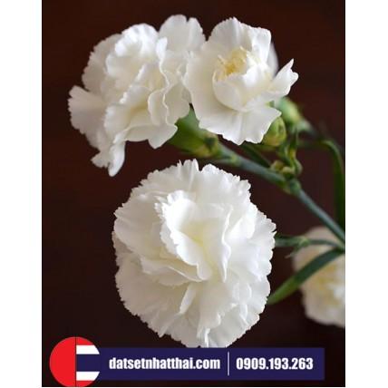 Hoa đất sét Cấm Chướng Carnations clay flower