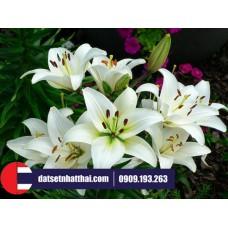 Hoa đất sét hoa Ly lily clay flower
