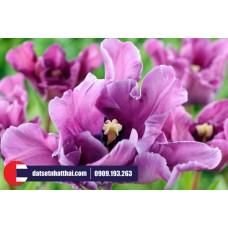 Hoa đất sét Tulip Parrot tulip clay flower