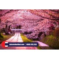 Nhật Bản ngày nay khác gì so với nước Nhật ngày xưa?